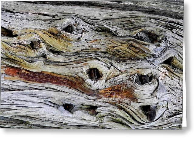 Gnarly Greeting Cards - Knotted Beauty Greeting Card by Lynda Lehmann