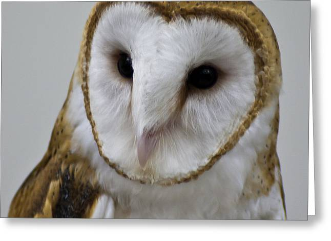 Snowy Night Night Greeting Cards - Knowing Barn Owl Greeting Card by LeeAnn McLaneGoetz McLaneGoetzStudioLLCcom