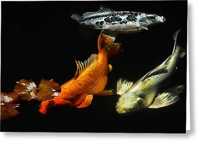 Koi by the Lillies Greeting Card by Don Mann