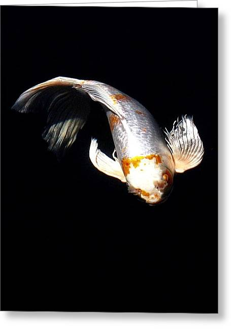 Koi From Above Greeting Card by Don Mann