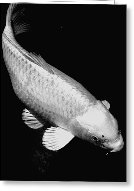 Oranda Greeting Cards - Koi in Monochrome Greeting Card by Don Mann
