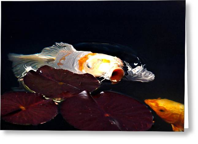 Oranda Greeting Cards - Koi in the Lillies Greeting Card by Don Mann