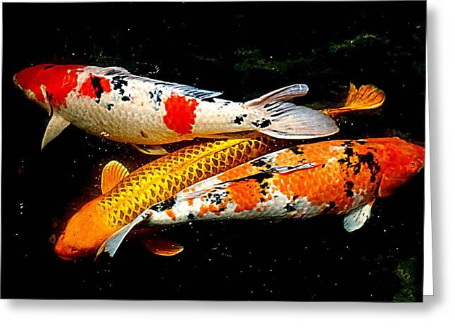 Koi Story Three E Greeting Card by Randall Weidner
