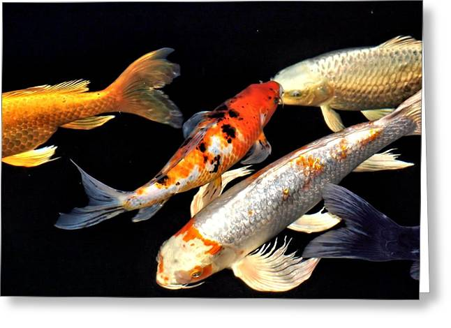 Oranda Greeting Cards - Koi Traffic Jam Greeting Card by Don Mann