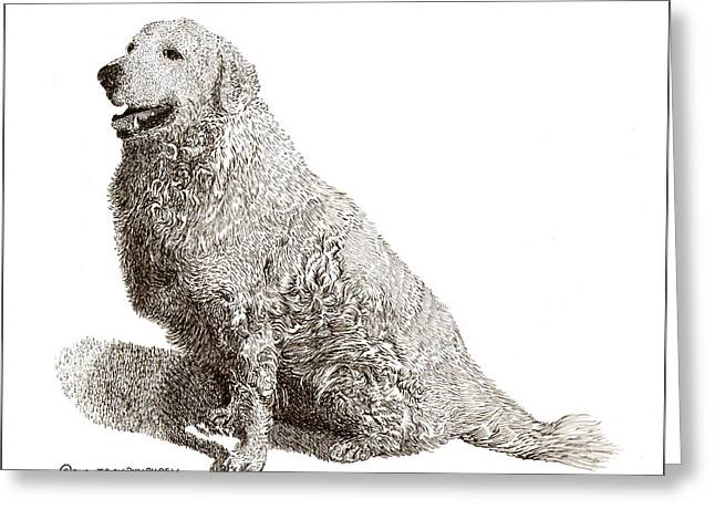 Quite Drawings Greeting Cards - Kuvasz named Pax Greeting Card by Jack Pumphrey