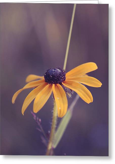 Aimelle Photography Greeting Cards - La Bella Greeting Card by Aimelle