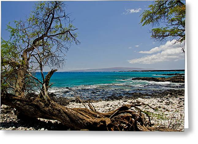 La Perouse Bay Greeting Cards - La Perouse Bay -2 Greeting Card by Baywest Imaging