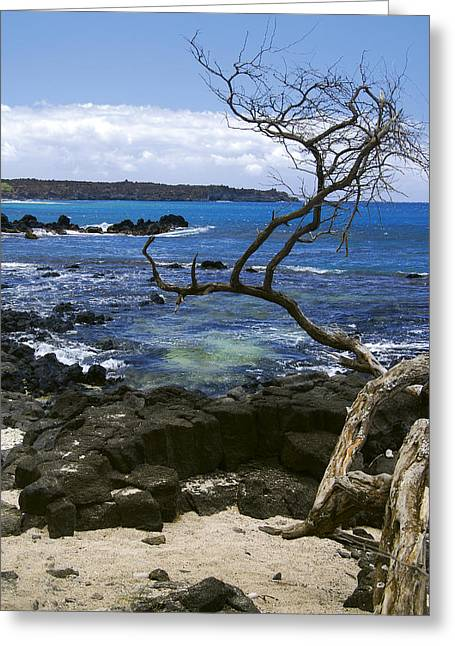 La Perouse Bay Greeting Cards - La Perouse Bay Greeting Card by Baywest Imaging