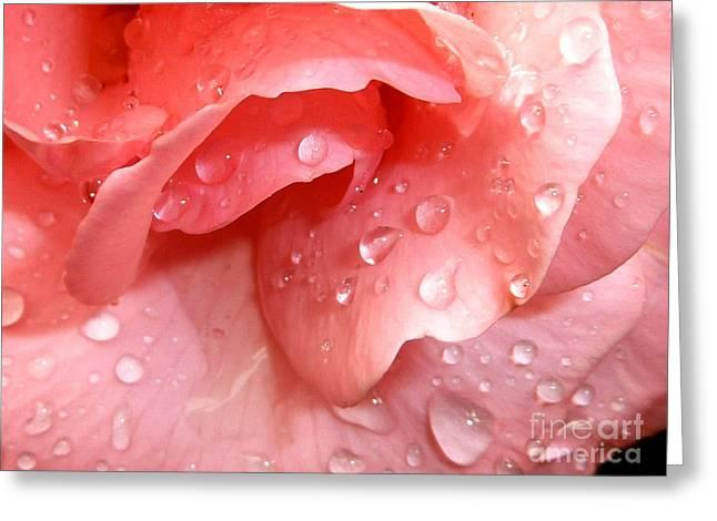 Light And Dark Photographs Greeting Cards - La vie en rose Greeting Card by Jan Willem Van Swigchem