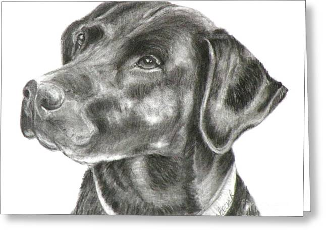 Labs Drawings Greeting Cards - Lab Charcoal Drawing Greeting Card by Susan A Becker