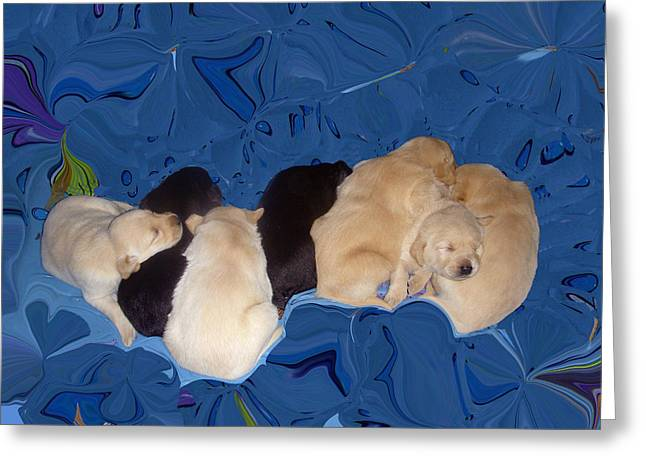 Lab Pups 1 Greeting Card by Aimee L Maher Photography and Art Visit ALMGallerydotcom
