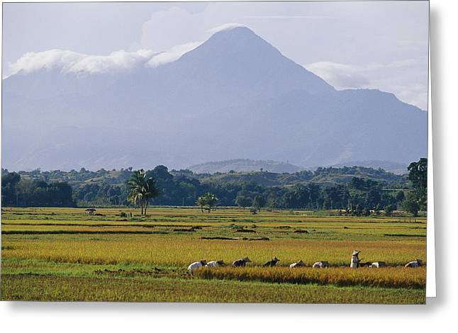 Laborers In A Rice Field Work Greeting Card by Steve Raymer