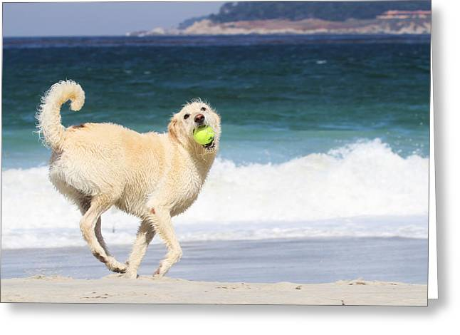 Mixed Labrador Retriever Greeting Cards - LabraDoodle Marilyn Monroe Greeting Card by Renae Laughner