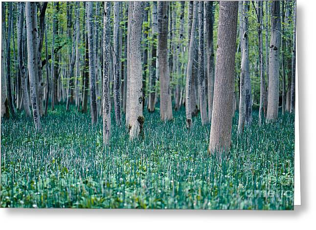 Floodplain Greeting Cards - Labyrinth Greeting Card by Alexander Kunz