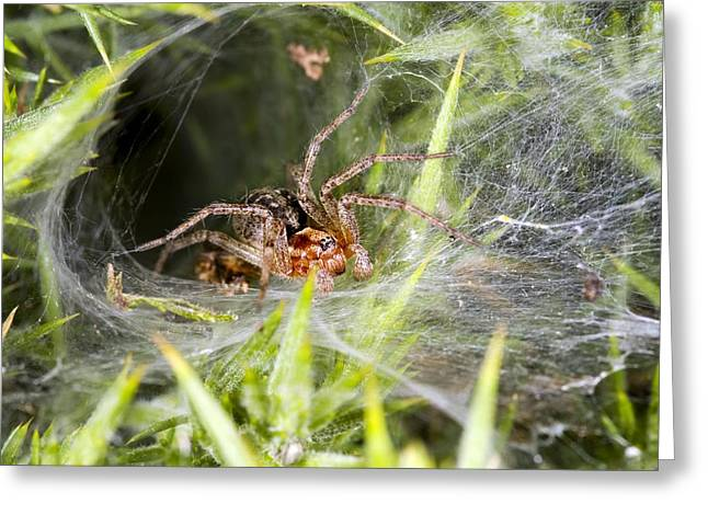 Spun Web Greeting Cards - Labyrinth Spider Greeting Card by Dr Keith Wheeler