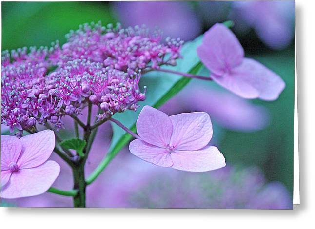 Becky Greeting Cards - Lace Greeting Card by Becky Lodes