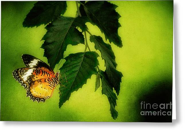 Lacewing Delight Greeting Card by Lois Bryan