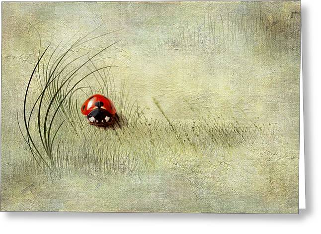 Isolated Mixed Media Greeting Cards - Lady Bird Greeting Card by Svetlana Sewell