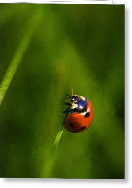 Lady In Green Greeting Cards - Lady In Red Greeting Card by Steven Richardson