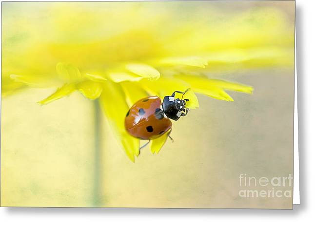 Lady In Yellow Greeting Card by Jacky Parker