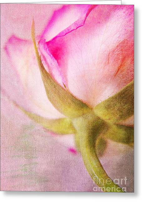 Rose Petals Mixed Media Greeting Cards - Lady rose Greeting Card by Angela Doelling AD DESIGN Photo and PhotoArt