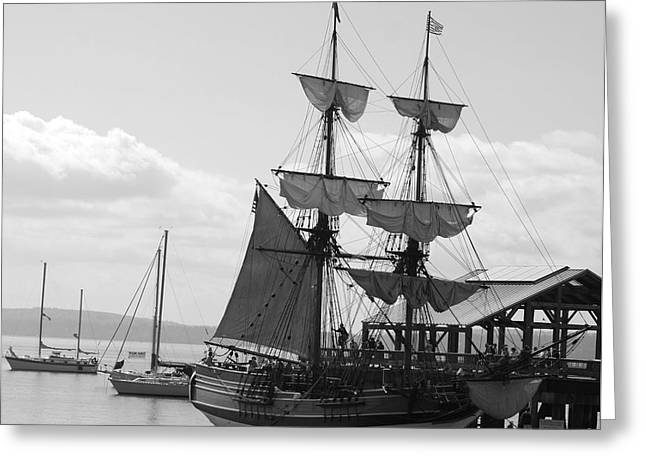 Best Sellers -  - Lady Washington Greeting Cards - Lady Washington Greeting Card by Sonja Anderson