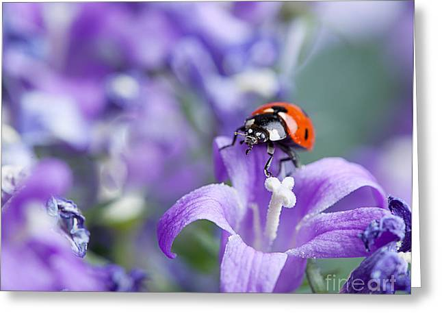 Dots Greeting Cards - Ladybug and Bellflowers Greeting Card by Nailia Schwarz