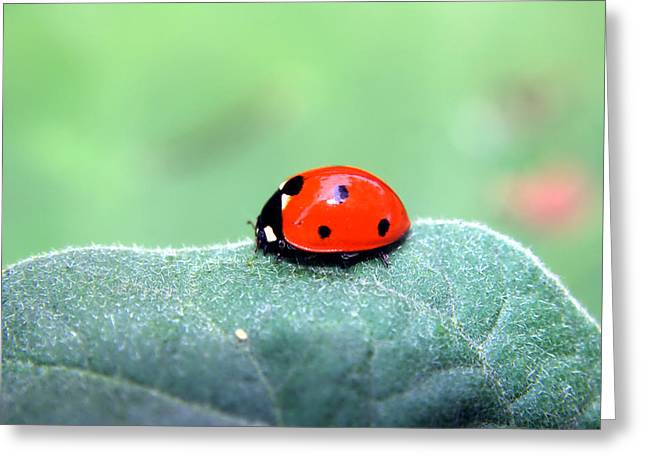 Ladybug II Greeting Card by Ester  Rogers