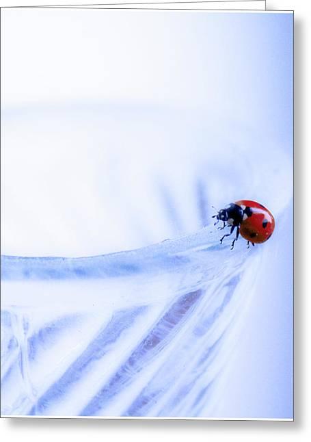 Floral Photos Pyrography Greeting Cards - Ladybug  Greeting Card by Svetlana Batalina