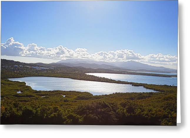 Mangrove Forest Greeting Cards - Laguna Grande  Greeting Card by George Oze