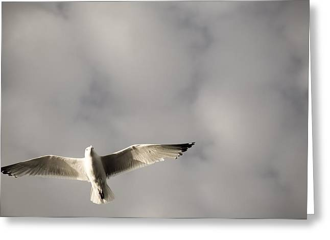 Graceful Animals Greeting Cards - Lake Of The Woods, Ontario, Canada Bird Greeting Card by Keith Levit