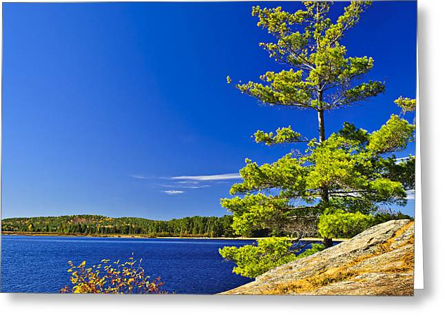 Blue Green Water Greeting Cards - Lake shore in Ontario Greeting Card by Elena Elisseeva