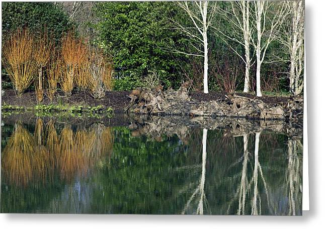 Dogwood Lake Greeting Cards - Lakeside Plants Greeting Card by Dr Keith Wheeler