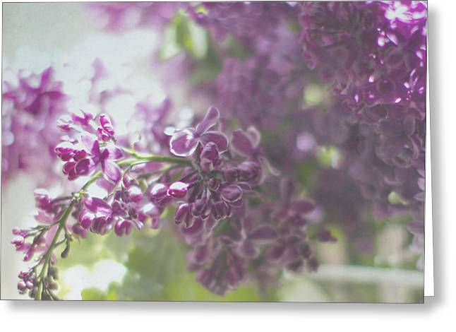Lalac Bokeh Greeting Card by Rebecca Cozart