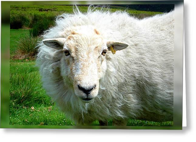 Roberto Alamino Greeting Cards - Lamb Greeting Card by Roberto Alamino