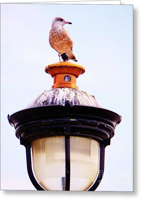 Lampost Gull   One Greeting Card by Judy Via-Wolff