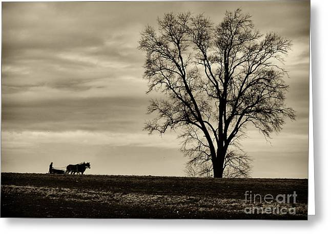 Amish Farms Greeting Cards - Lancaster Farm 1 Greeting Card by Jack Paolini