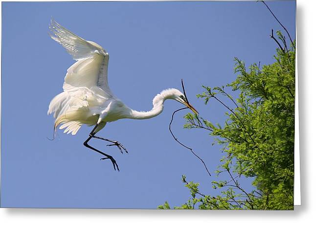 Landing Gear Down Greeting Card by Paulette Thomas