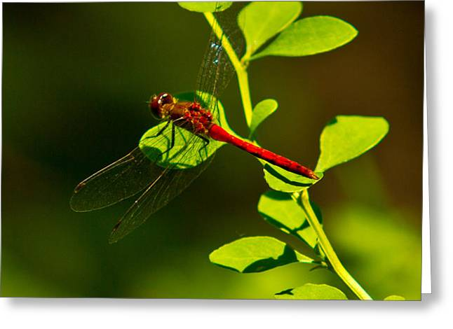 Landing Pad Greeting Card by Frank Pietlock