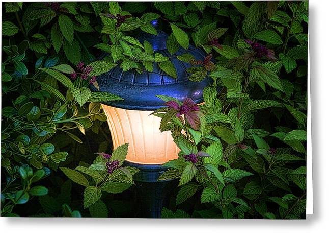Lush Greeting Cards - Landscape Lighting Greeting Card by Tom Mc Nemar