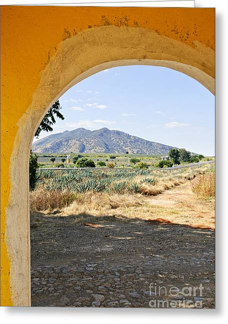 Archways Greeting Cards - Landscape with agave cactus field in Mexico Greeting Card by Elena Elisseeva