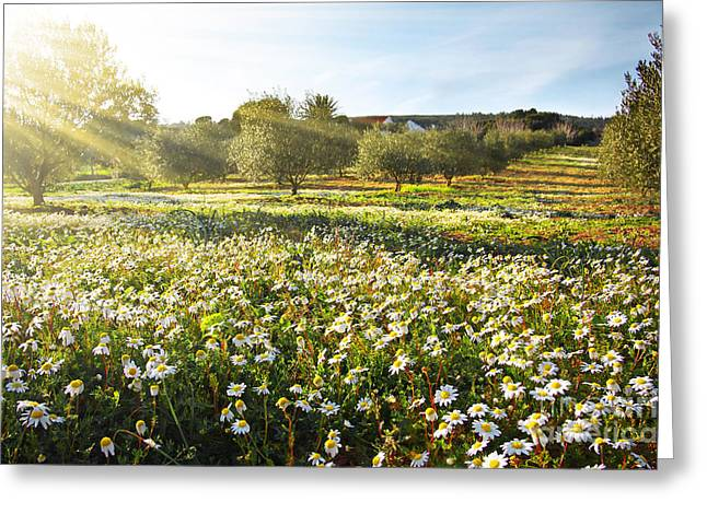 Sunset Abstract Greeting Cards - Landscape with Daisies Greeting Card by Carlos Caetano