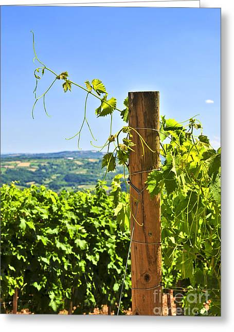 Grapevines Greeting Cards - Landscape with vineyard Greeting Card by Elena Elisseeva