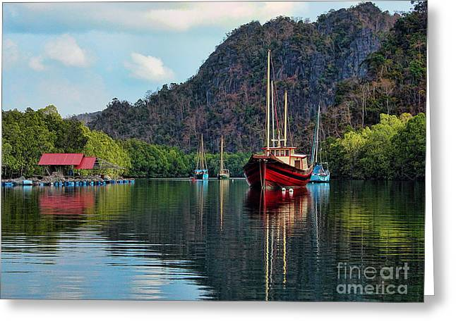 Photographic Print Box Greeting Cards - Langkawi Mangroves Greeting Card by Graham Taylor