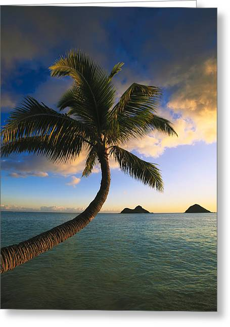 Amazing Sunset Greeting Cards - Lanikai Sunrise and Palm III Greeting Card by Tomas del Amo