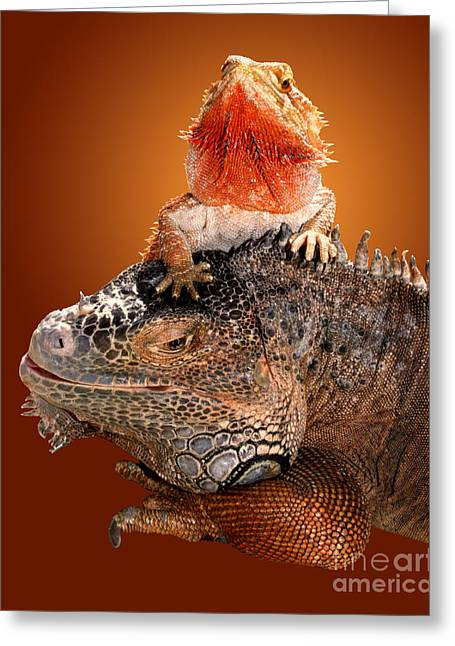 Zoology Greeting Cards - Lap Lizard Greeting Card by Jim Carrell