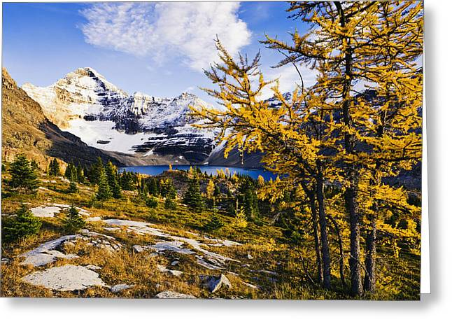 Brightness Greeting Cards - Larch Trees, Lake Mcarthur And Mount Greeting Card by Yves Marcoux