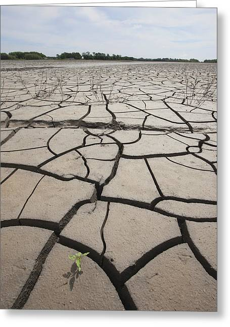 Ground Level Greeting Cards - Large Cracks In The Earth From Dry Greeting Card by Susan Dykstra