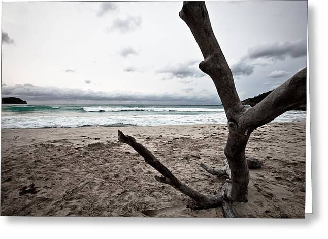 Large Piece Of Driftwood On A Beach On An Overcast Day Greeting Card by Anya Brewley schultheiss