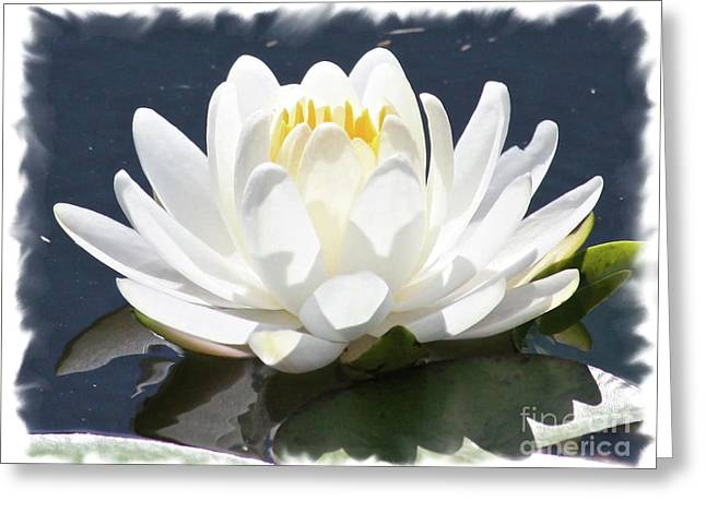 Sunlight On Flowers Greeting Cards - Large Water Lily with White Border Greeting Card by Carol Groenen